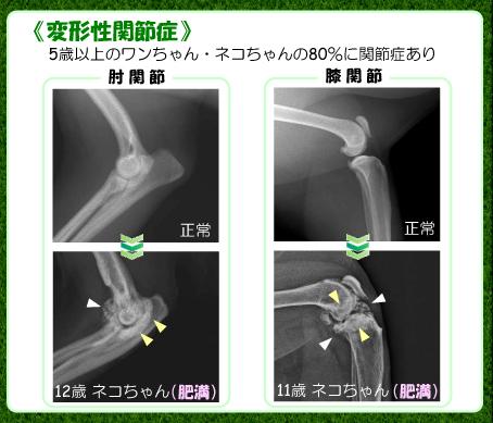 関節症のレントゲン画像