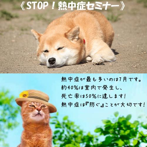 STOP!熱中症セミナーへお越しください!