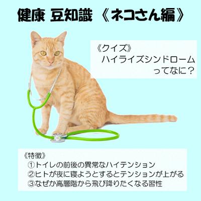 猫のハイライズシンドローム(フライングキャットシンドローム)