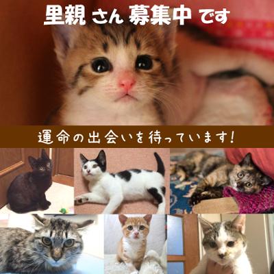 猫 里親 神奈川